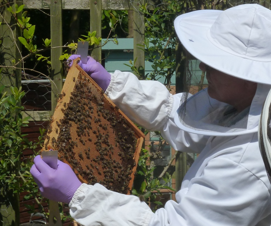 Picture of a beekeeper and a frame